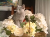 uthai-parmi-les-fleurs-taille-site