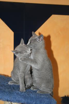 calin de deux chatons