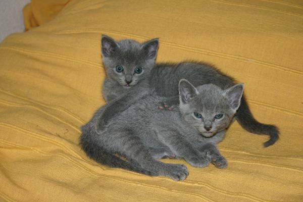 deux chatons agés d'un mois