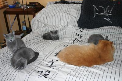 Notre lit ...