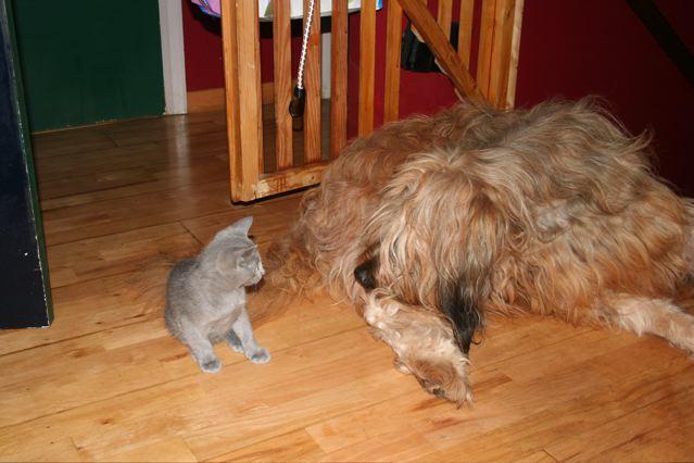Whaou, la grosse bête : même pas peur !