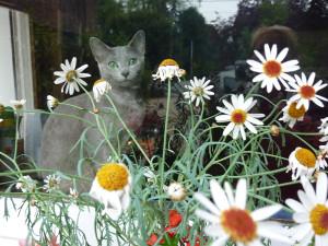 une fleur parmi les fleurs  ... E'SUSHI du CHEMIN des RÊVES BLEUS