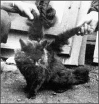 chat ailé 6