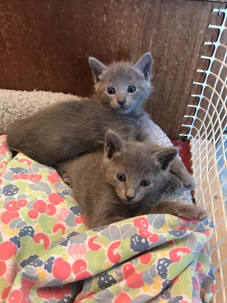 Ils ont un mois et de grands yeux encore bleus, bien sur